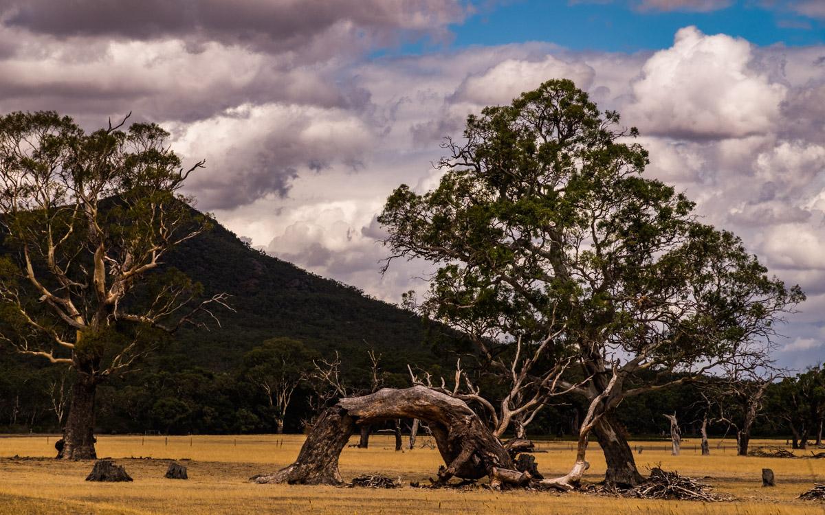 Inner Australia